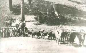 Lumber in 1897 | Pedersen's Sawmill
