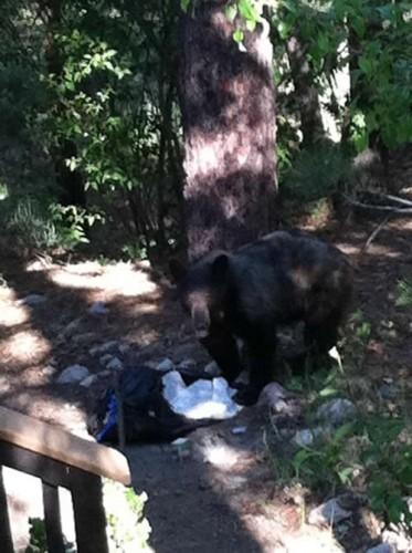 Fawnskin Bear
