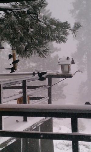 Birds Weather the Storm!