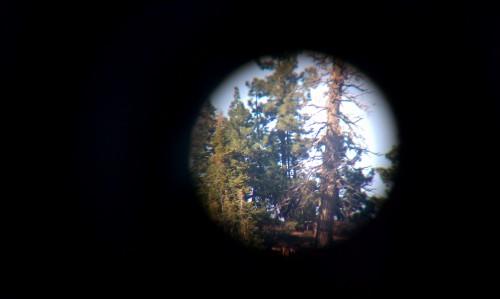 Where's Jack? | Juvenile Eagle 4-23-2012 8:15am