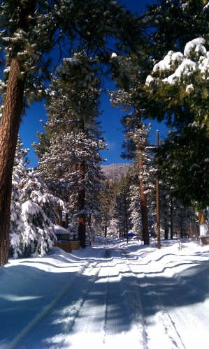 Snowy bus-stop-fawnskin (2)