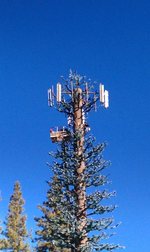 Cell Tower Fawnskin