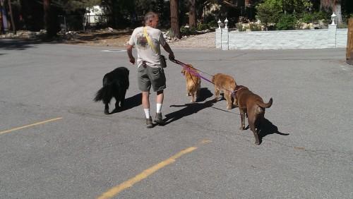 Dog Man Fawnskin
