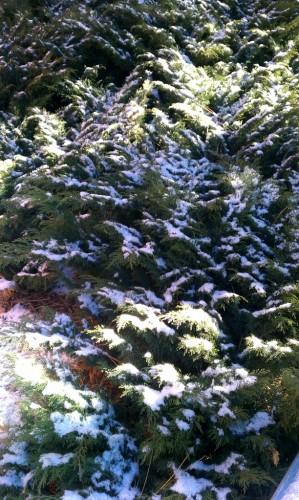 Fawnskin Snow Flurry
