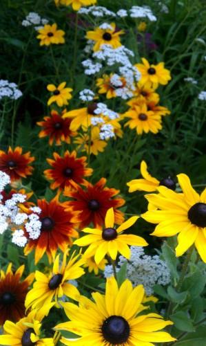 Fawnskin Flowers