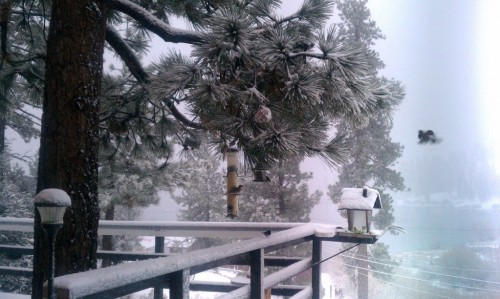 Fawnskin Snow
