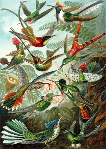 hummingbirds fawnskin
