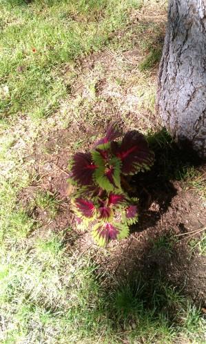 Fawnskin Garden