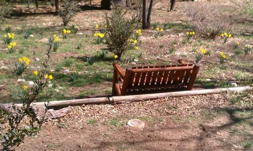 Spring Blooms in Fawnskin